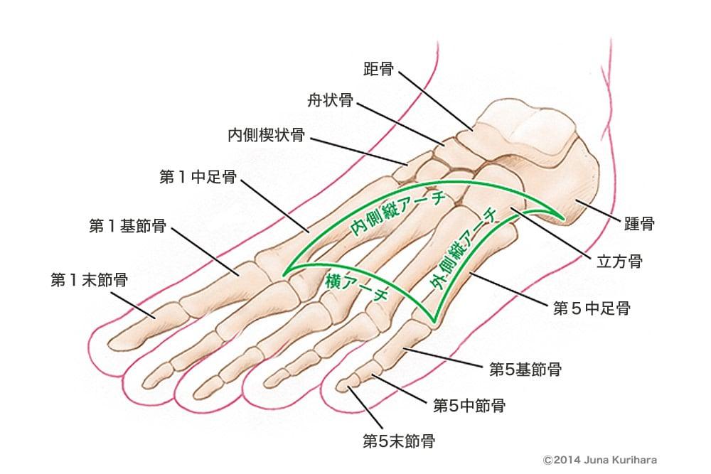 「足部 アーチ」の画像検索結果