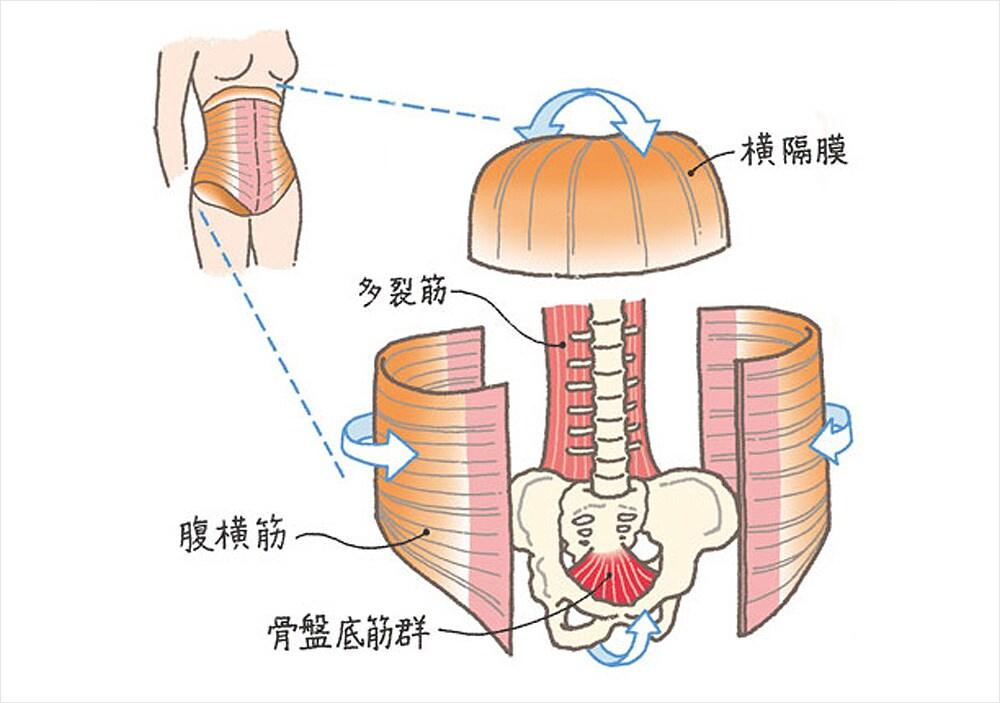 「骨盤底筋」の画像検索結果